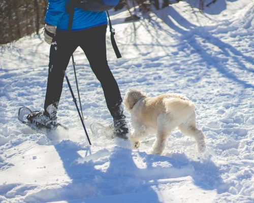 Snowshoeing in Potter-Tioga county